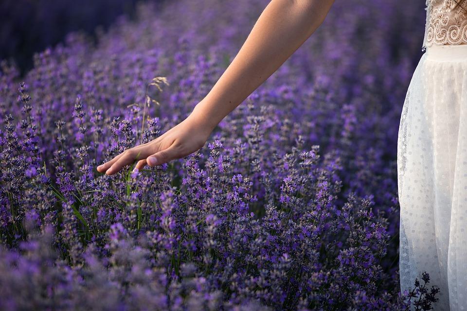 lavender-3576129_960_720